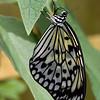 Stratford Butterfly Farm 21-04-12  113