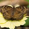 Stratford Butterfly Farm 21-04-12  116