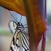 Tropical Wings 01-05-11   007