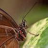 Tropical Wings 01-05-11   019