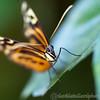 Tropical Wings 01-05-11   005