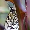 Tropical Wings 01-05-11   008