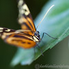 Tropical Wings 01-05-11   004