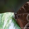 Tropical Wings 01-05-11   017
