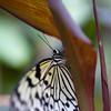 Tropical Wings 01-05-11   009