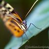 Tropical Wings 01-05-11   006