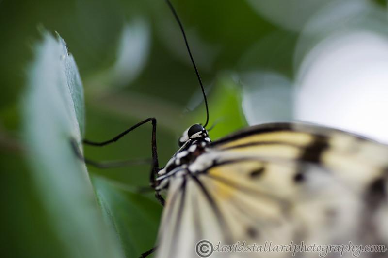 Tropical Wings 01-05-11   001