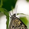 Tropical Wings 01-05-11   013