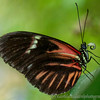 testing the new glass - Tropical Wings butterfly 'zoo'