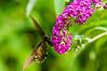 100718-Butterfly-006