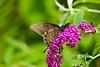 100718-Butterfly-008