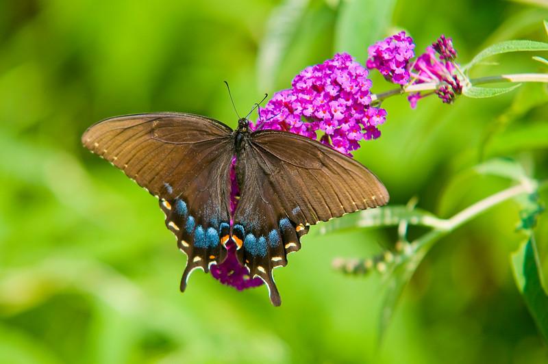 100718-Butterfly-007