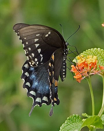 Butterflys and Other Bugs