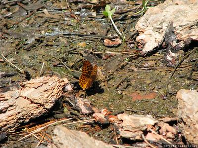 0710_0075_Butterfly