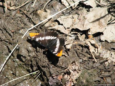 0710_0084_Butterfly