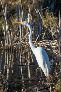 """Egret on Little Lake"""