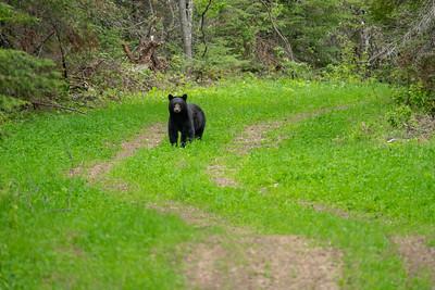 """Spring Bear"""