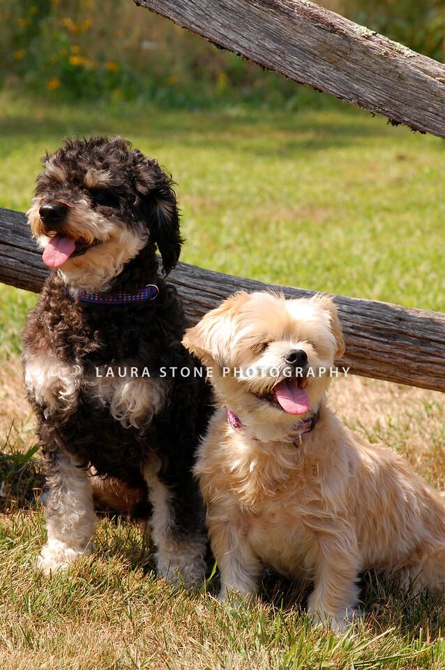 Phoebe and Marley