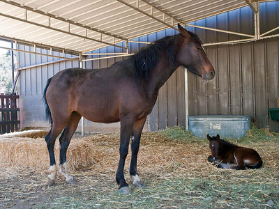 Proud Mother and Filly