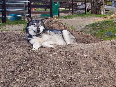 Tough Job, this Dog Business.