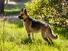 Backlit Dog