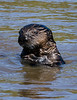 Portrait of youth (Sea Otter style!)