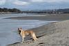San Diego River O.B. Dog Beach