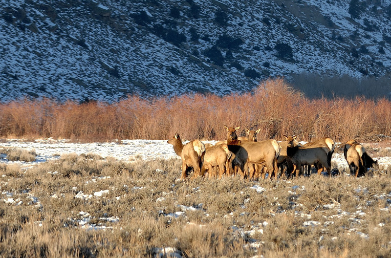 Sunset  Elks