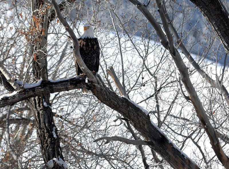 Eagle 2013