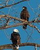 01-Canton_Eagles-DSC_7495