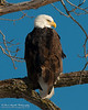 01-Canton_Eagles-DSC_7463