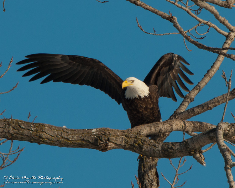 01-Canton_Eagles-DSC_7447