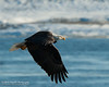 01-Canton_Eagles-DSC_7504