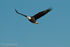 01-Canton_Eagles-DSC_7507