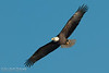 01-Canton_Eagles-DSC_7441