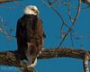 01-Canton_Eagles-DSC_7456