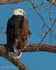 01-Canton_Eagles-DSC_7467