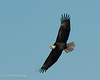01-Canton_Eagles-DSC_7518