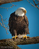 01-Canton_Eagles-DSC_7486