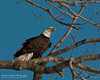 01-Canton_Eagles-DSC_7451