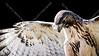 Cape Fear Raptor Rescue-48-3R