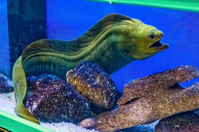 Live tank fish at Marine Science Education Center