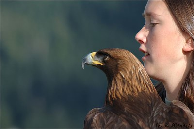 Sauran the Golden Eagle at Grouse Mtn show. (Pacific Northwest Raptors,  Duncan, BC)