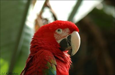 Parrot Bloedel Conservatory,  Vancouver, BC