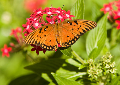 River_Forest_Butterfly_20081026_0019