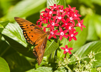 River_Forest_Butterfly_20081026_0027