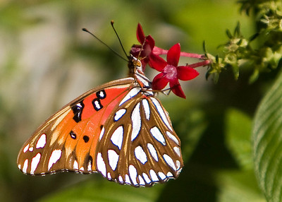 River_Forest_Butterfly_20081026_0009