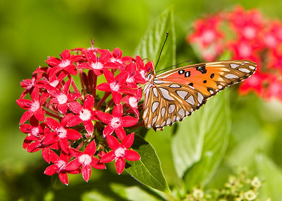River_Forest_Butterfly_20081026_0023