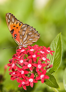River_Forest_Butterfly_20081026_0024