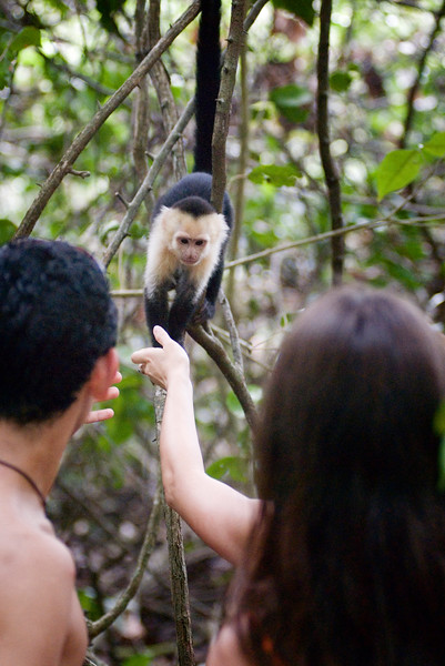 A tourist tries to touch a capuchin monkey - This is a dangerous practice and harmful chemicals from sunscreen can hurt such a small animal - not to mention habituating animals to humans is never a good idea